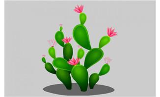 开花的仙人掌flash动画