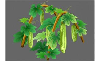苦瓜生长flash植物动画