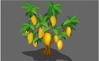 成熟的芒果树flash植物素材