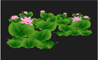 池塘盛开的荷花flash动画
