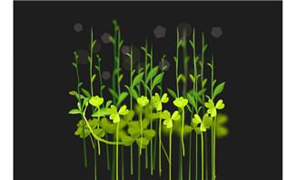 豆芽豆苗flash植物动画
