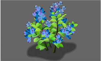 黑加仑植物flash动画