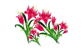漂亮红色百合花手绘背景