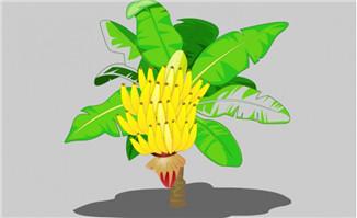 手绘卡通香蕉树植物造型