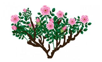 开满花朵的树木素材下载