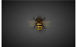 蜜蜂飞行拍动翅膀动作a