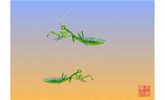 爬行的螳螂各种动作flas