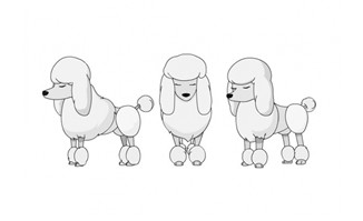 三视图贵宾犬flash动画矢量