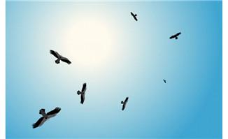 天空飞翔的老鹰flash动画