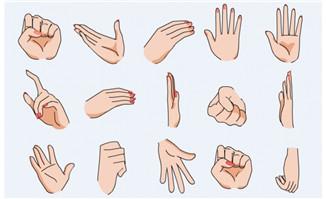 女性手指手势手部动作素