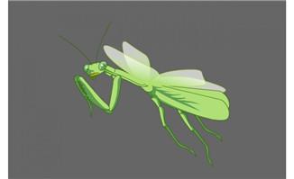 卡通螳螂flash动画