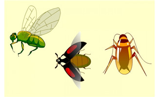 卡通昆虫flash动画