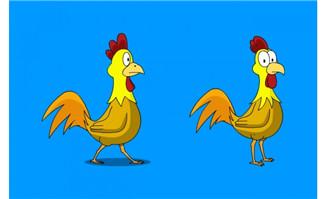 卡通公鸡走路和站立眨眼