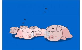 一群可爱的猪睡觉打呼f