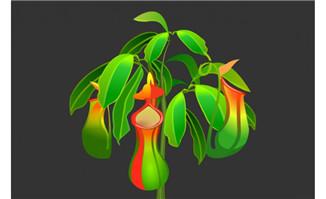 猪笼草草本植物手绘背景