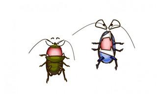2只小强昆虫跳动flash动画