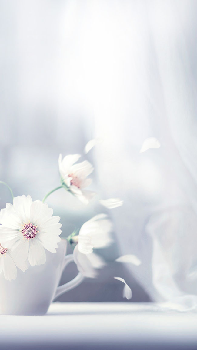 主页 图片素材 h5背景素材 > 清新花朵h5背景  详细描述