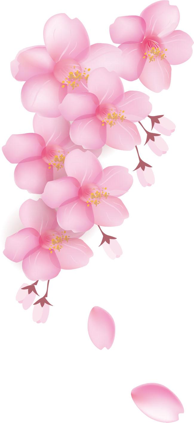 樱花花瓣元素矢量图素材