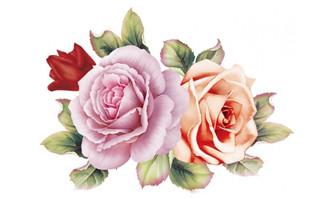 <b>手绘玫瑰花图片素材下载</b>