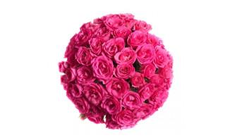 <b>粉红色玫瑰花图片素材下载</b>