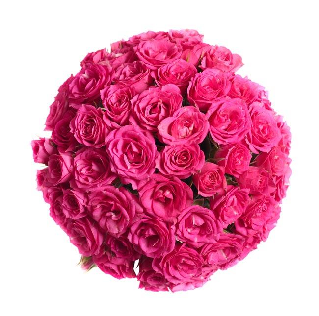 粉红色玫瑰花图片素材下载
