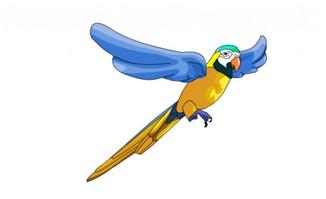 飞翔飞行中的鹦鹉动作f