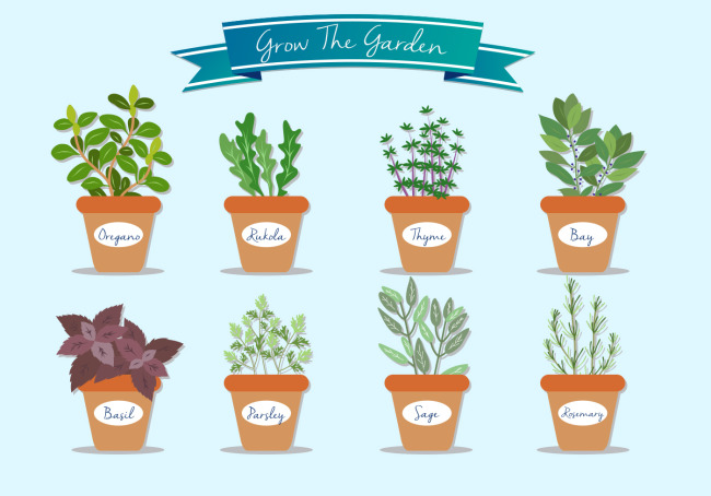 手绘清新植物盆栽设计矢量素材    盆栽植物花卉设计   矢量花卉