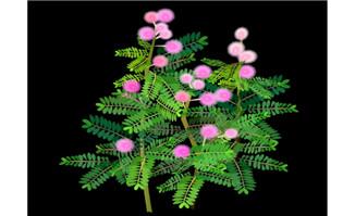 含羞草植物flash动画动态效