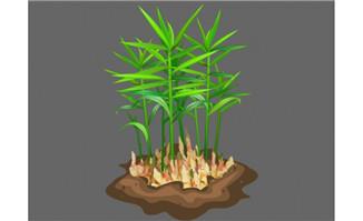 生姜植物种植flash动态动画