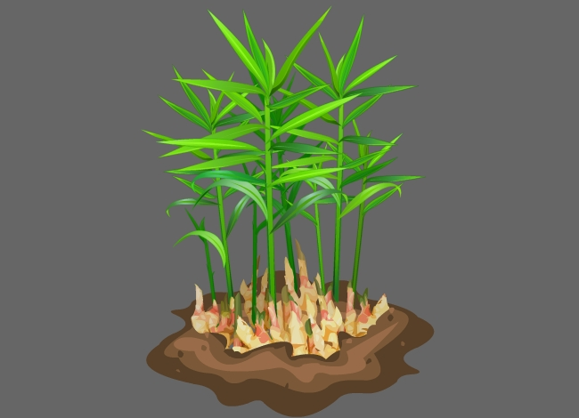 生姜植物种植flash动态动画素材图片