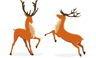 两只驯鹿圣诞主题动物动