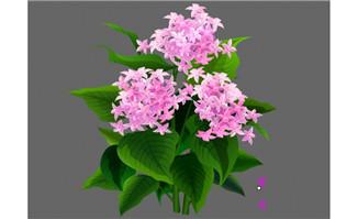 繁星花植物素材flash动画效