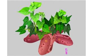 红薯地瓜植物素材flash动画