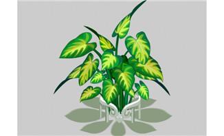 合果芋花卉植物素材flas
