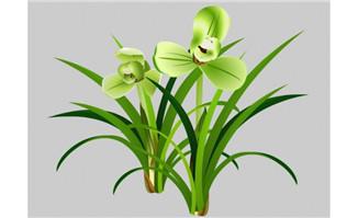 花开的兰花宋梅植物花卉