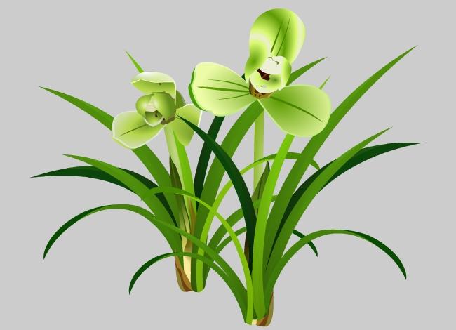 花开的兰花宋梅植物花卉素材flash动画素材图片
