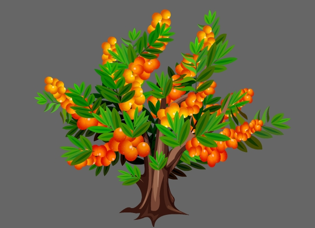 沙棘植物果实树flash动画素材下载图片