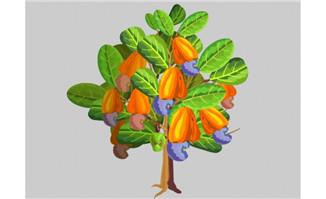 植物肾形坚果腰果树矢量