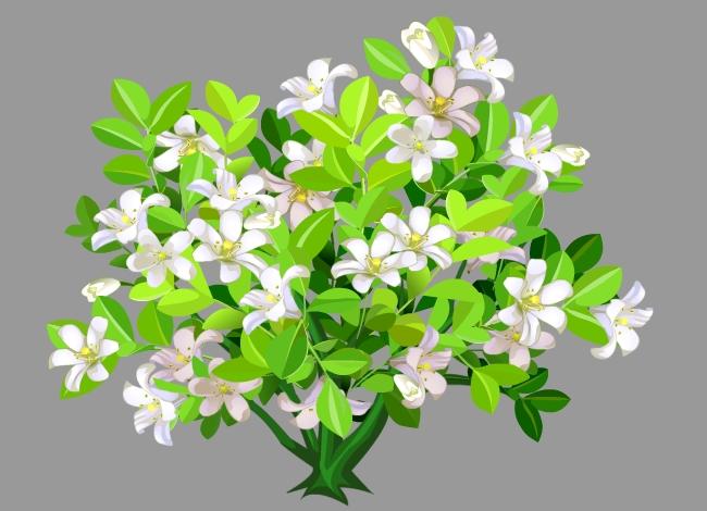 茂盛的白色花朵植物花卉树flash动画素材图片