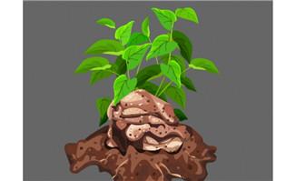 在土壤里面的蔬菜植物f