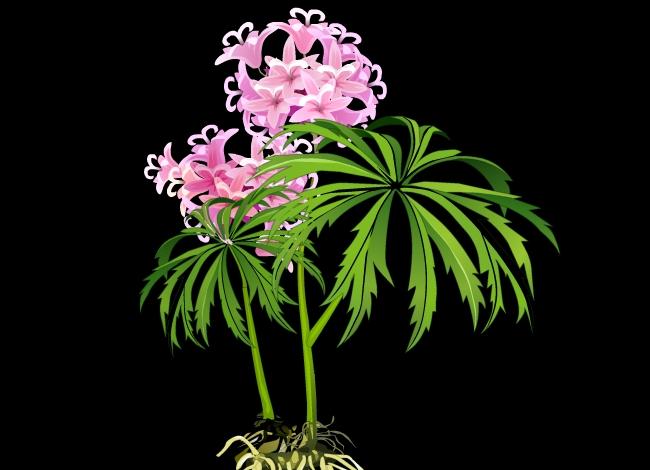 花卉植物兔儿伞矢量flash动画短片素材图片
