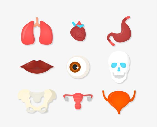 人体内脏器官矢量图标设计素材