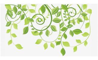 春天绿叶蔓藤造型设计绿