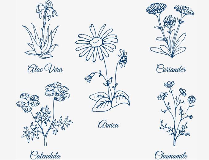 手绘线条春天花卉植物花朵植物矢量图标