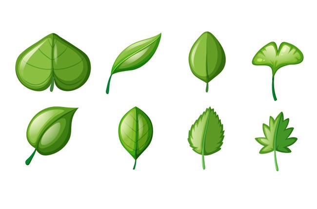 绿色大树叶子不同造型的设计素材下载图片