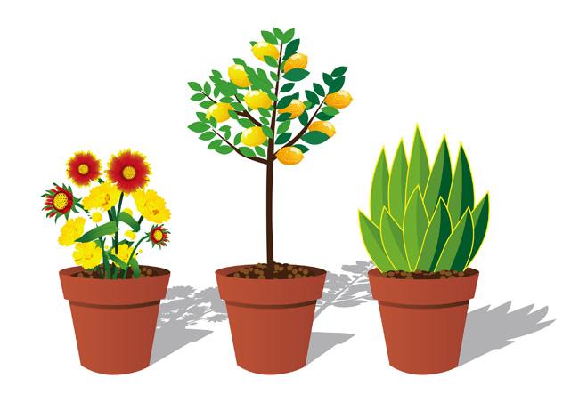 3种花卉植物花盆造型设计矢量素材  花艺盆栽矢量装饰素材  室外