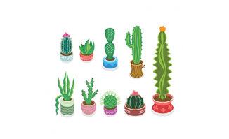 各种造型的植物花卉仙人