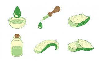 6组芦荟植物研究提取原液