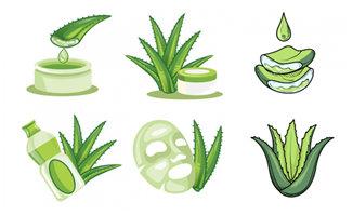 卡通手绘矢量芦荟植物精