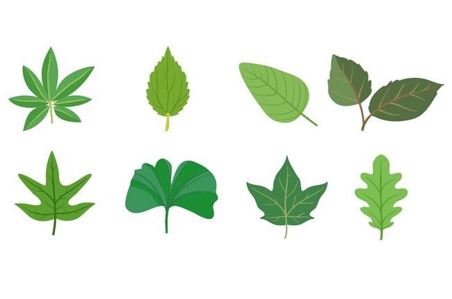 不同植物的树叶造型设计矢量素材